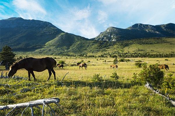 horses in paklenica antional park